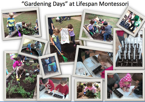 lifespan-montessori