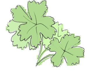 hydoponics