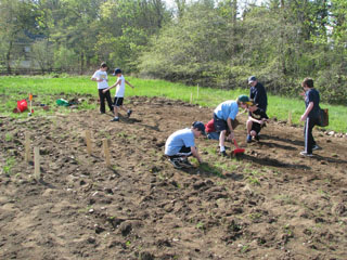 Cub Scouts Clear the Land